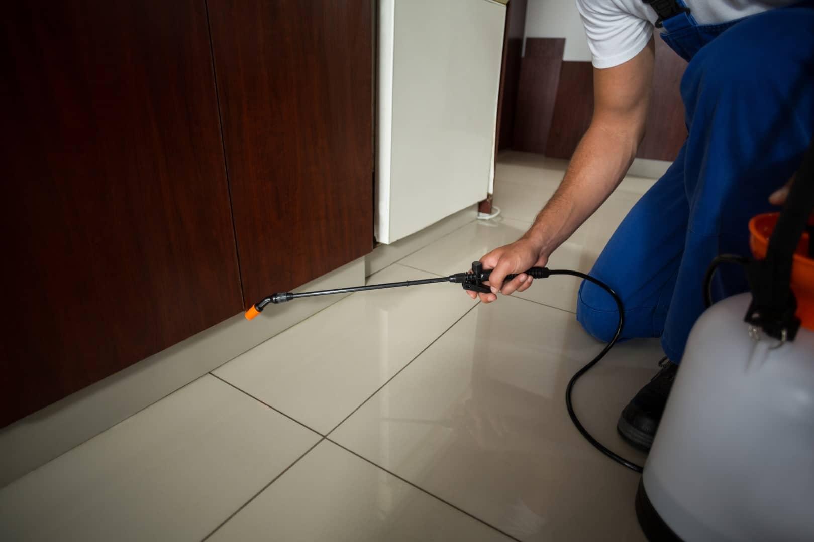 Curtail Pest Infestation Through Professional Pest Control Service